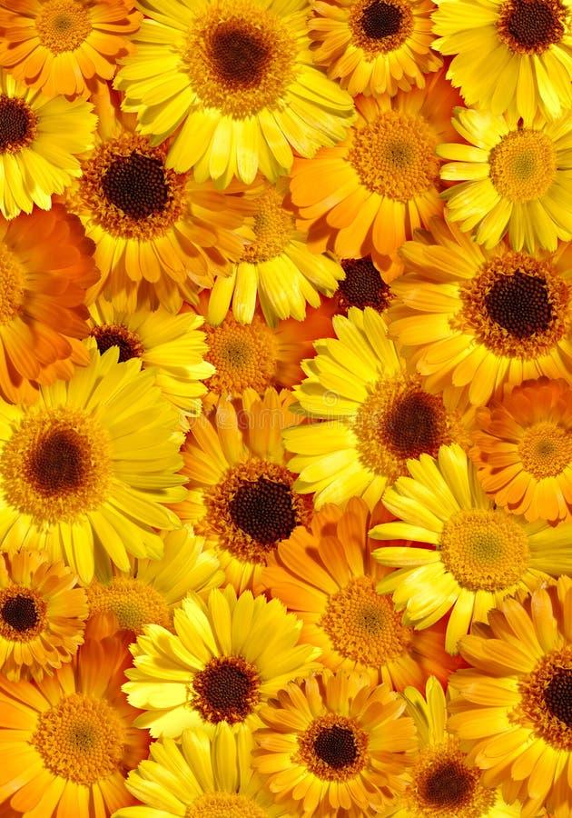 Fondo floral amarillo hermoso imagenes de archivo