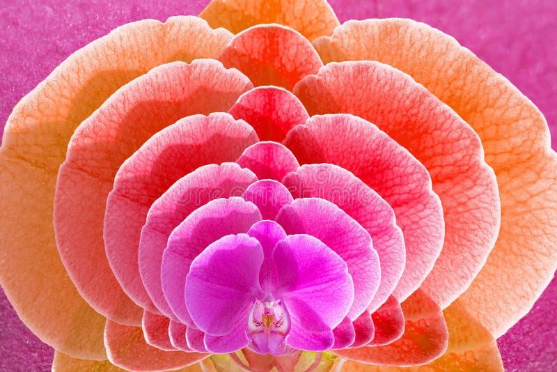 Fondo floral con los flores de la orquídea del phalaenopsis imágenes de archivo libres de regalías