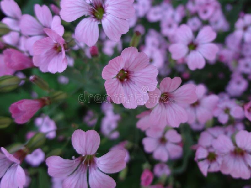 Fondo floral de flores de color de malva delicadas en la oscuridad imagenes de archivo
