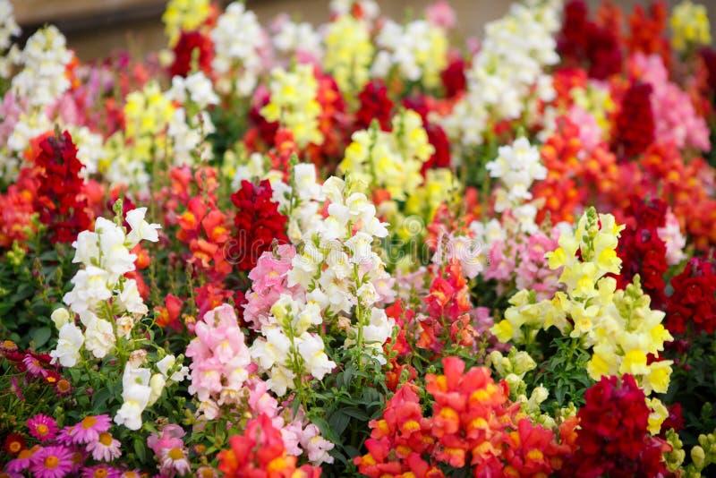 Fondo floral de la flor Garden foto de archivo libre de regalías