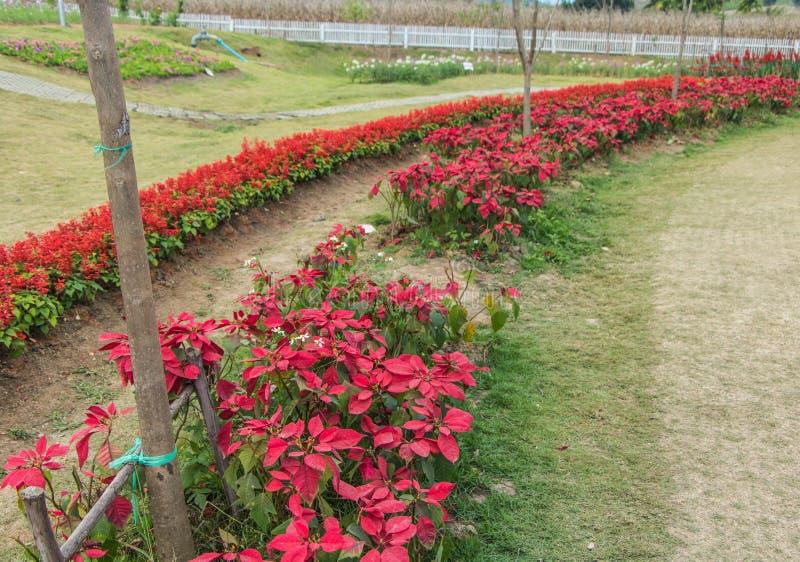 Fondo floral de la flor Garden foto de archivo