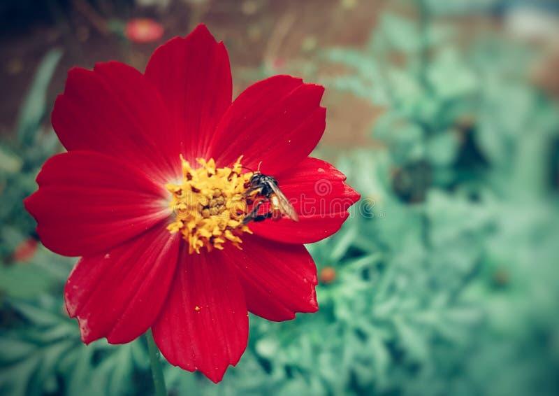 Fondo floral de la flor Garden imagen de archivo