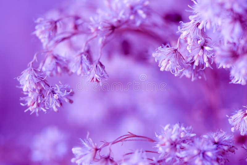 Fondo floral de la lila imagenes de archivo