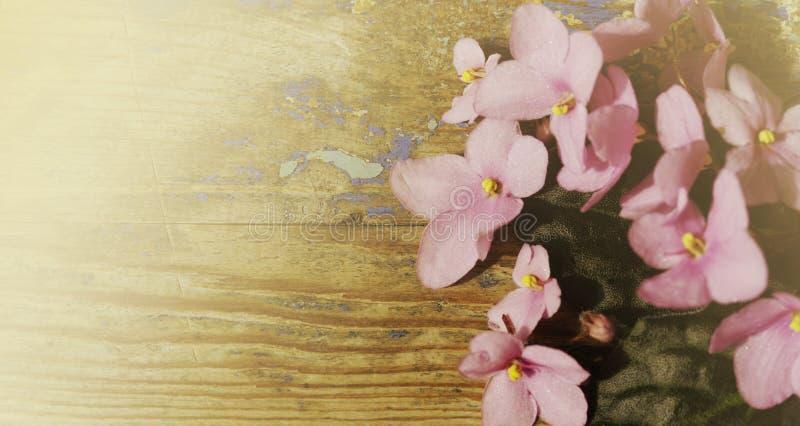 Fondo floral de la vendimia Ramo de flores violetas rosadas en un viejo tablero de madera Ma?ana soleada brumosa imagenes de archivo