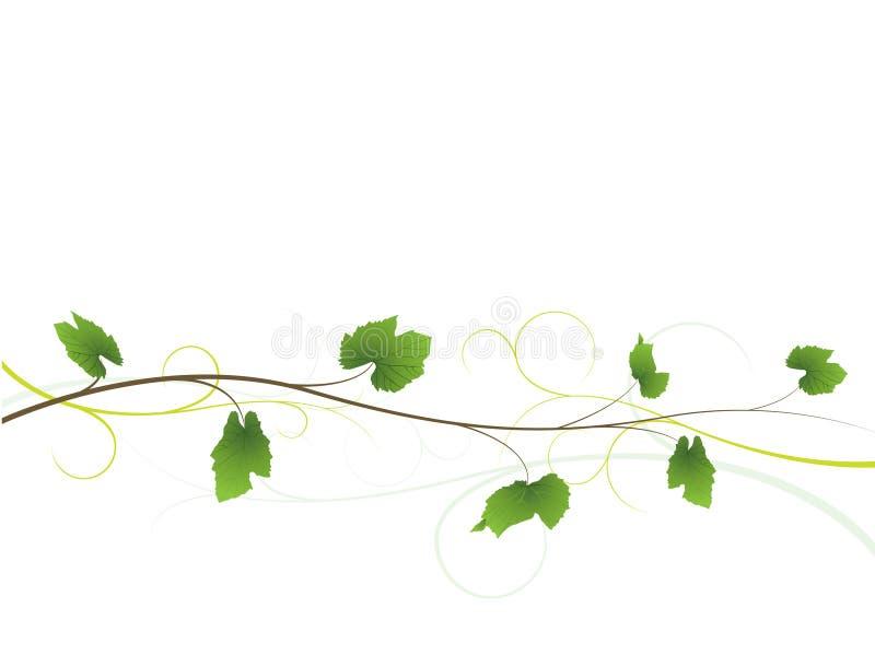Fondo floral de la vid ilustración del vector