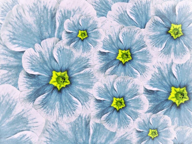Fondo floral de las flores violetas Turquesa blanca de las flores con el centro azul claro imagenes de archivo