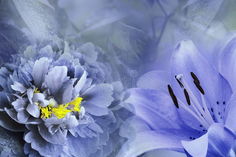 Fondo floral del lirio púrpura y de la peonía azul-violeta Florece el primer en un fondo de los azules turquesa Composición de la imagen de archivo libre de regalías