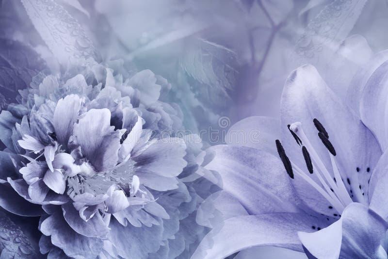 Fondo floral del lirio violeta y de la peonía violeta-azul Florece el primer en un fondo de la violeta-turquesa Composición de la fotos de archivo