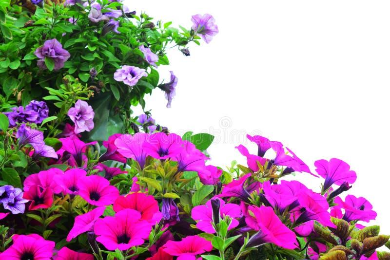 Fondo floral en blanco imagen de archivo