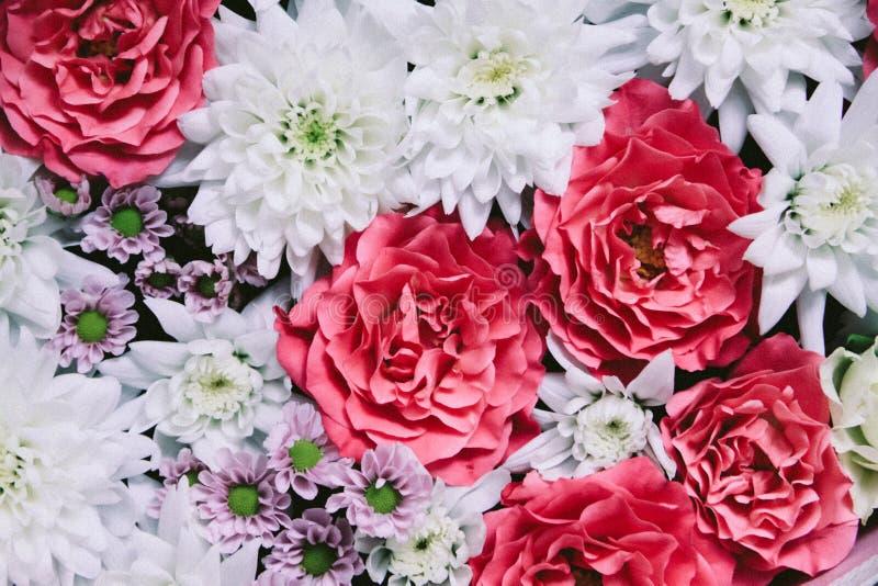 Fondo floral hermoso con la rosa y el crisantemo blanco imagen de archivo libre de regalías