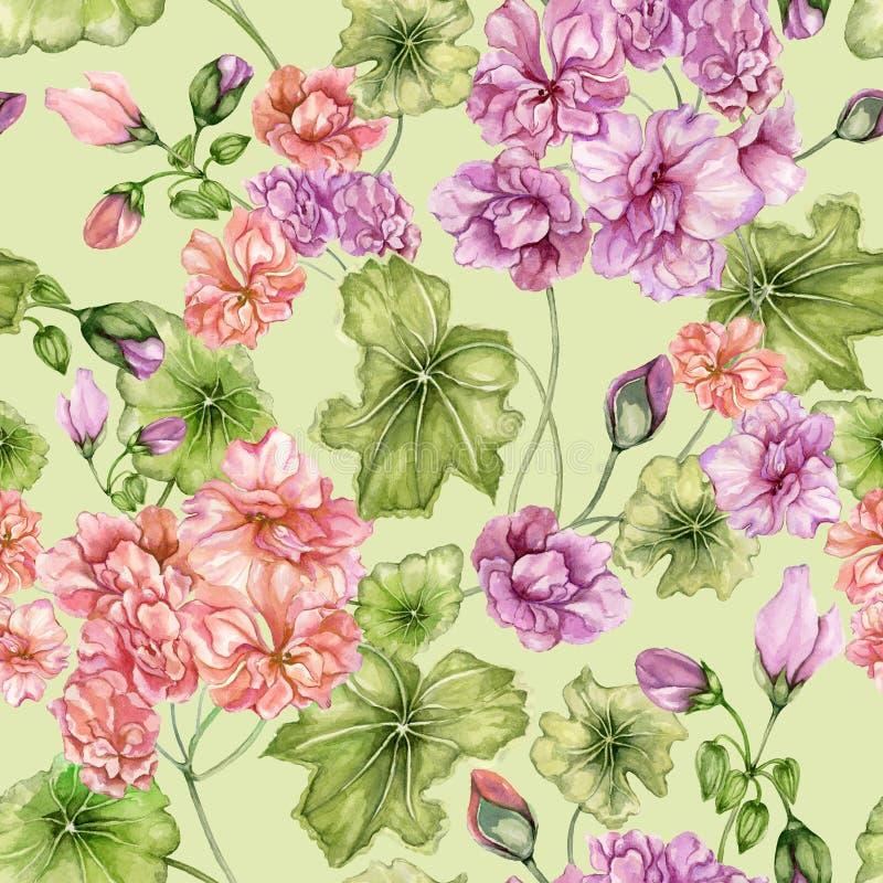 Fondo floral hermoso con las flores y las hojas del Pelargonium Modelo botánico inconsútil Pintura de la acuarela Pintado a mano ilustración del vector