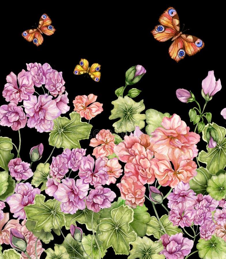 Fondo floral hermoso con las flores y las mariposas del Pelargonium en fondo negro Modelo botánico inconsútil, frontera libre illustration