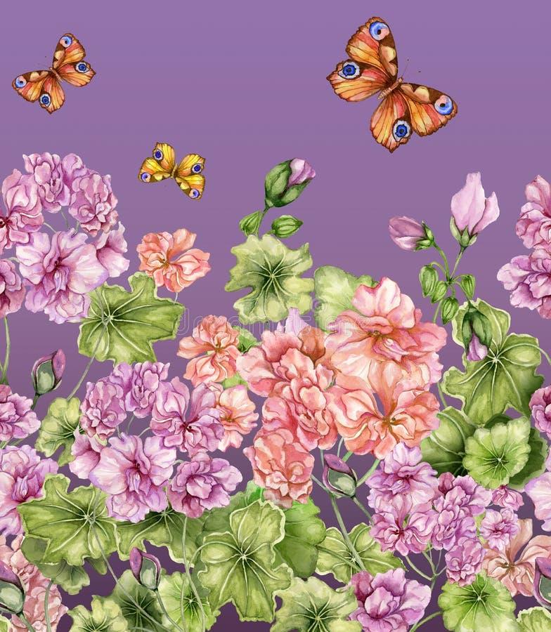 Fondo floral hermoso con las flores y las mariposas del Pelargonium en fondo púrpura Modelo inconsútil, frontera ilustración del vector