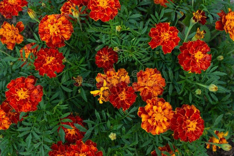 Fondo floral hermoso del fondo… con las flores coloridas imagenes de archivo