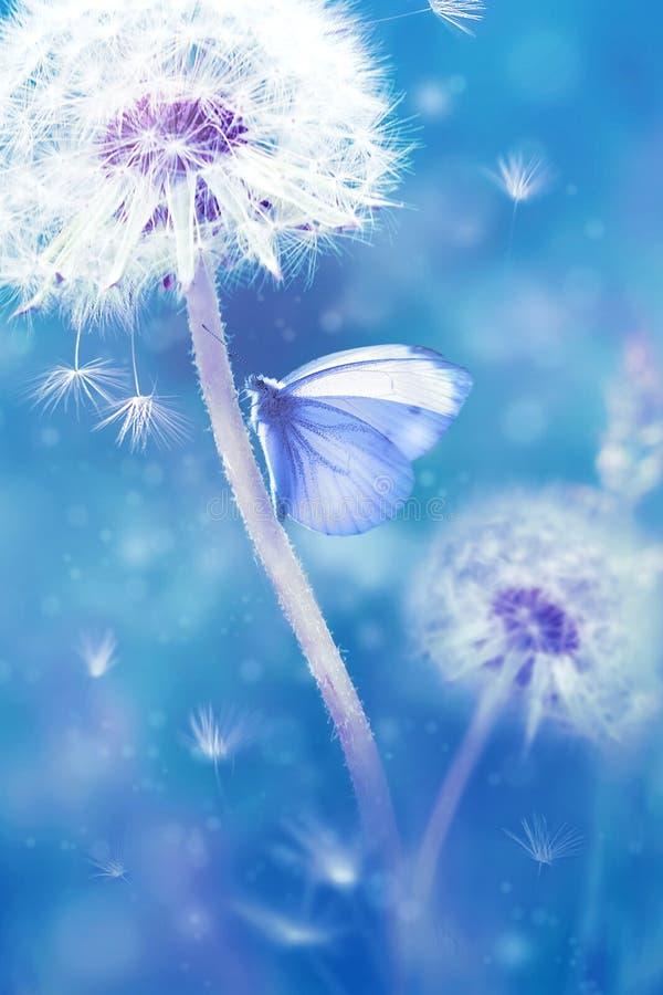 Fondo floral natural del verano Dientes de león blancos y mariposa hermosa en un fondo fantástico azul fotos de archivo