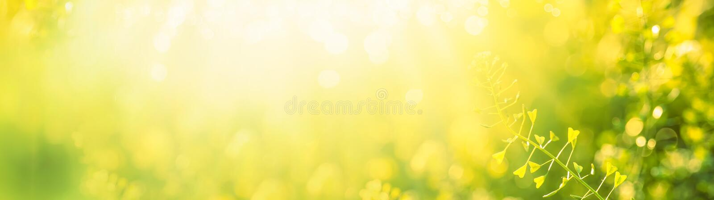Fondo floral natural del verano o de la primavera con el campo floreciente amarillo, imagen entonada borrosa con el bokeh, bander fotos de archivo