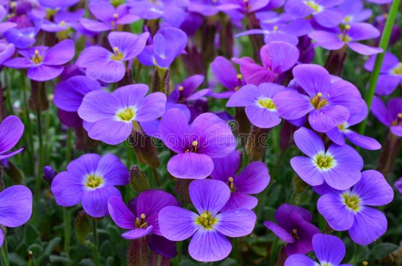 Fondo floral púrpura imagen de archivo libre de regalías