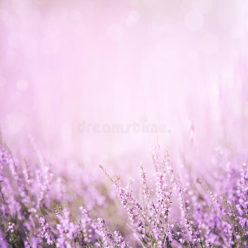 Fondo floral púrpura borroso fotos de archivo