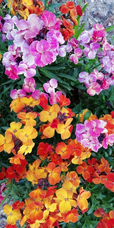 Fondo floreale allegro scenico di estate Giallo, rosso, arancia, fiori porpora di estate su un fondo di erba verde fotografie stock