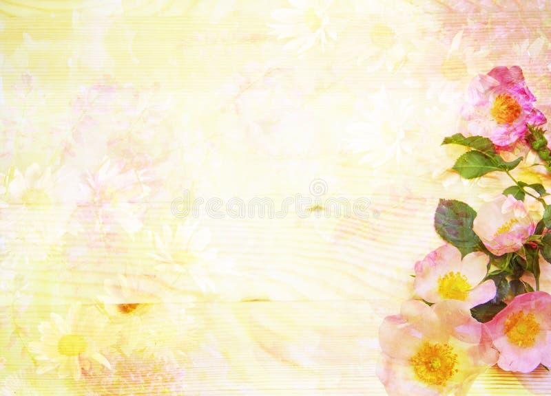 Fondo floreale astratto scenico con le rose selvatiche illustrazione di stock