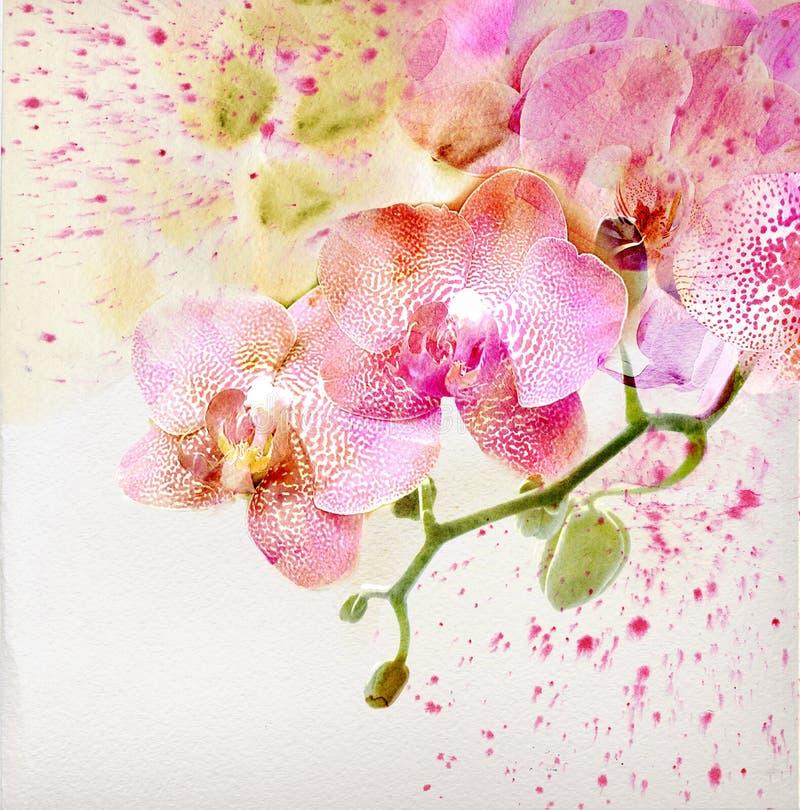 Fondo floreale con l'orchidea dell'acquerello fotografie stock libere da diritti