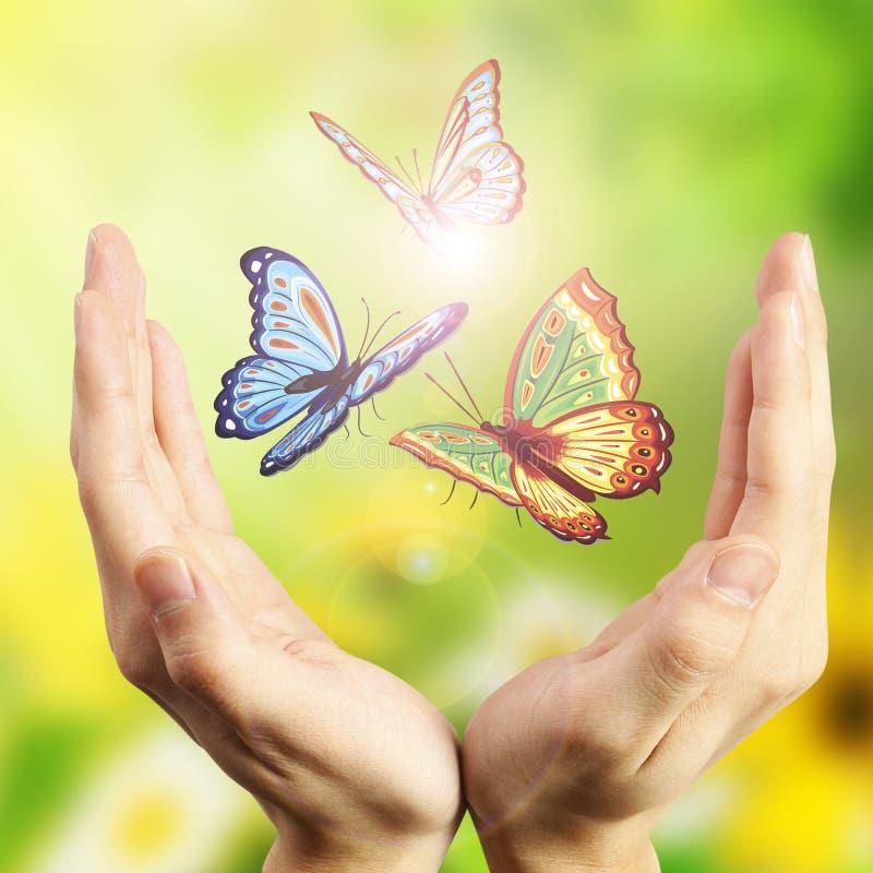 Fondo floreale con la farfalla ed i fiori fotografia stock