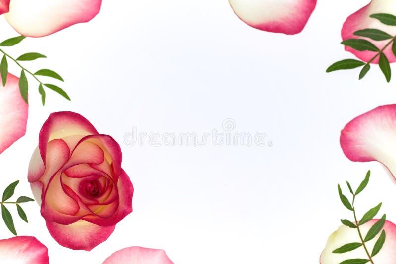 Fondo floreale con un germoglio di fiore rosa immagini stock libere da diritti