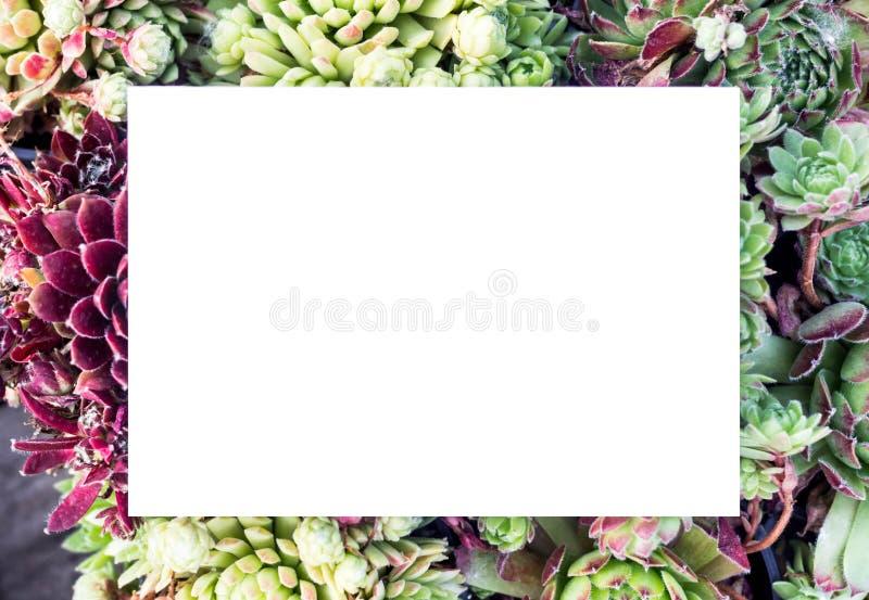 Fondo floreale con una forma rettangolare di colore bianco Modello Bella struttura rettangolare con i fiori e le foglie Estate immagine stock
