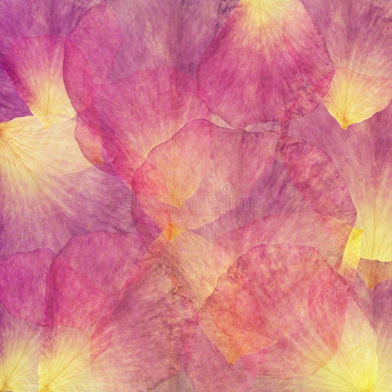 Fondo floreale del batik di lerciume di arte Colori pastelli di Stylization, acquerelli Contesto strutturato d'annata con il rosa immagine stock