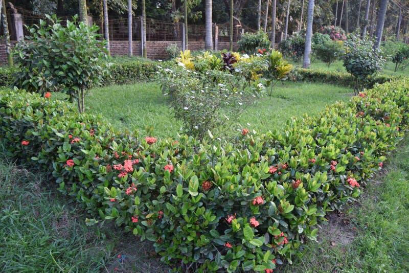 Fondo floreale del fiore Garden fotografia stock