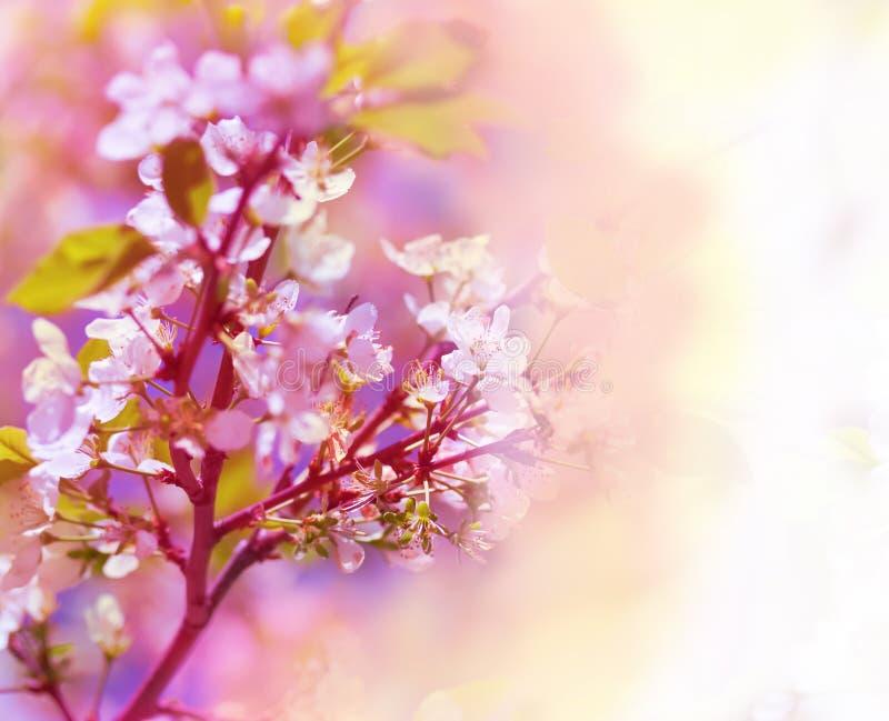 Fondo floreale della bella molla fotografie stock libere da diritti