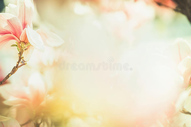 Fondo floreale della natura della primavera con il fiore adorabile della magnolia, struttura, natura di primavera, colore pastell fotografia stock libera da diritti