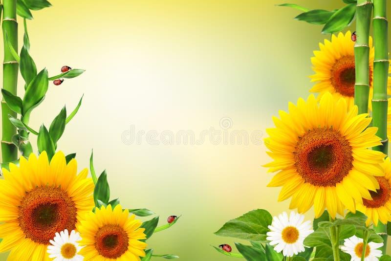 Fondo floreale della primavera con le coccinelle immagini stock libere da diritti