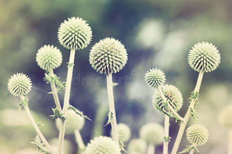 Fondo floreale della sfuocatura di Defocus bello. immagini stock libere da diritti