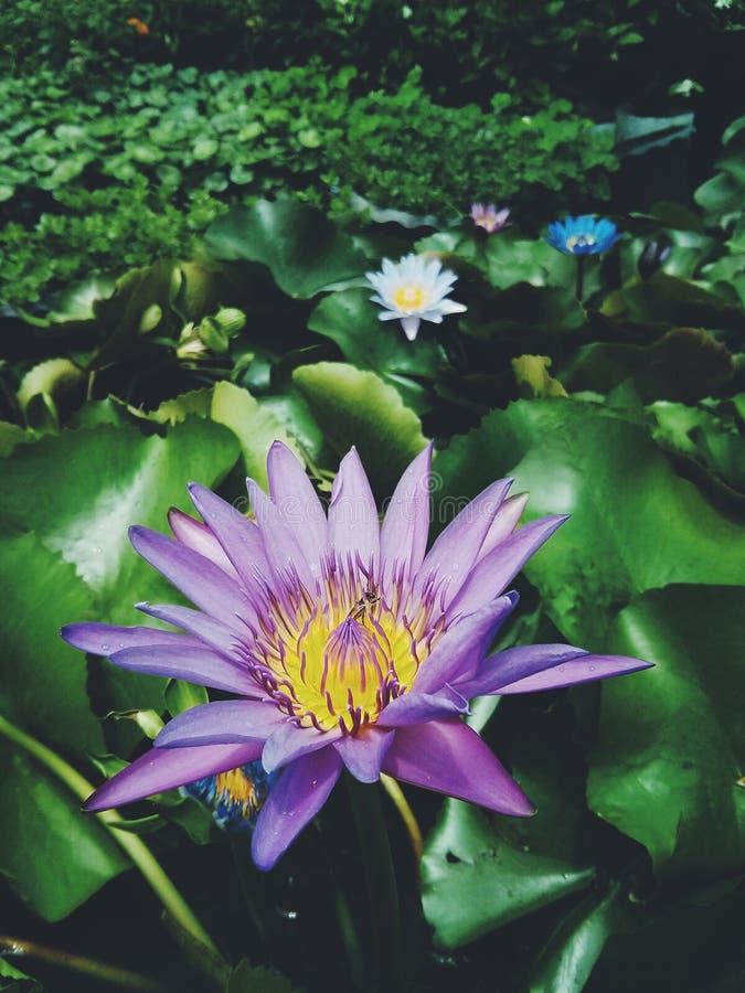 Fondo floreale di arte con effetto di struttura filtrato fotografie stock libere da diritti