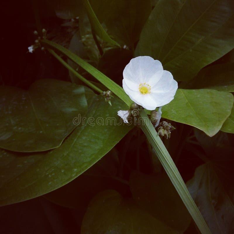 Fondo floreale di arte con effetto di struttura filtrato fotografia stock