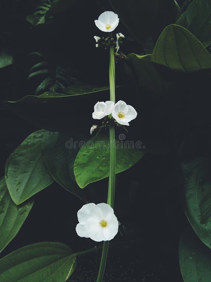 Fondo floreale di arte con effetto di struttura filtrato immagini stock