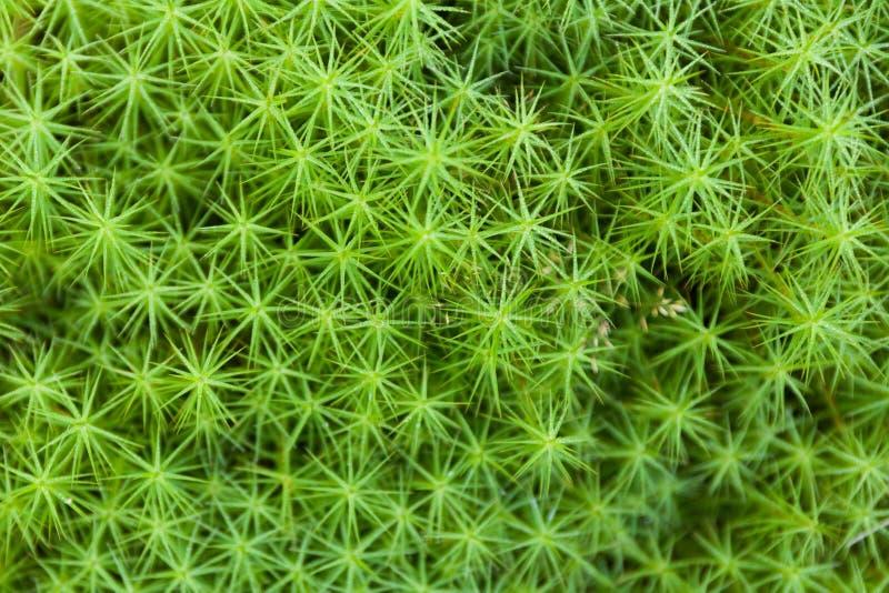 Fondo floreale esotico, ecologia forestale Giardino botanico astratto fotografia stock libera da diritti