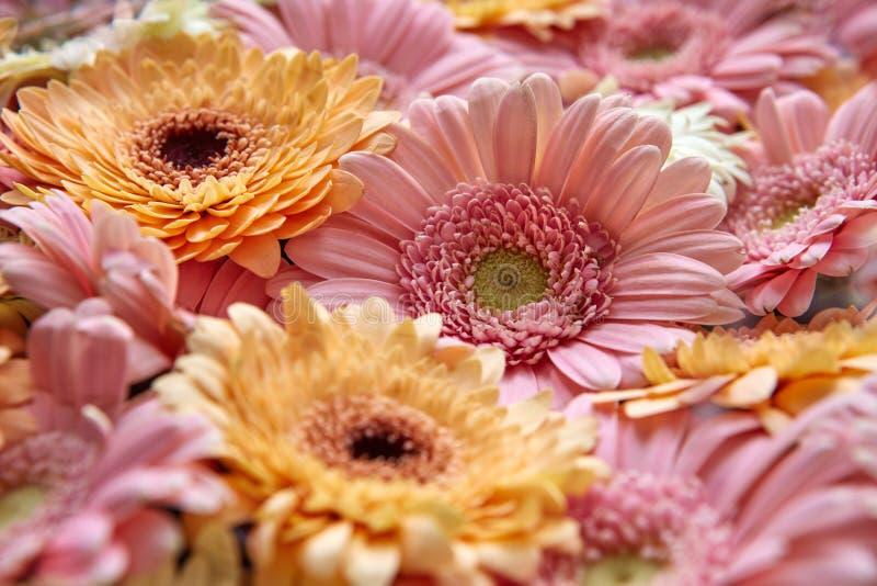 Fondo floreale naturale delle gerbere luminose Valentino del cuore su fondo bianco immagini stock libere da diritti