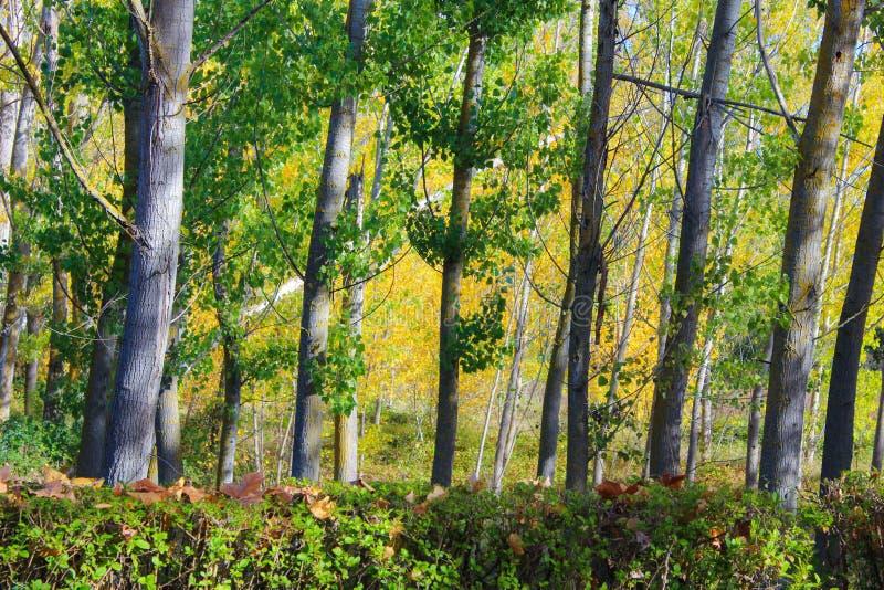 Fondo Forest Leaves Leaf Park de los árboles fotos de archivo