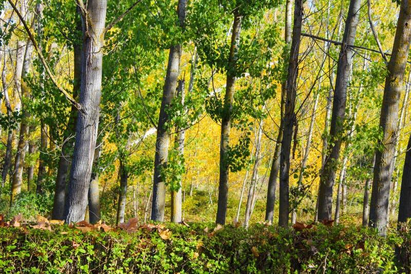 Fondo Forest Leaves Leaf Park de los árboles fotografía de archivo