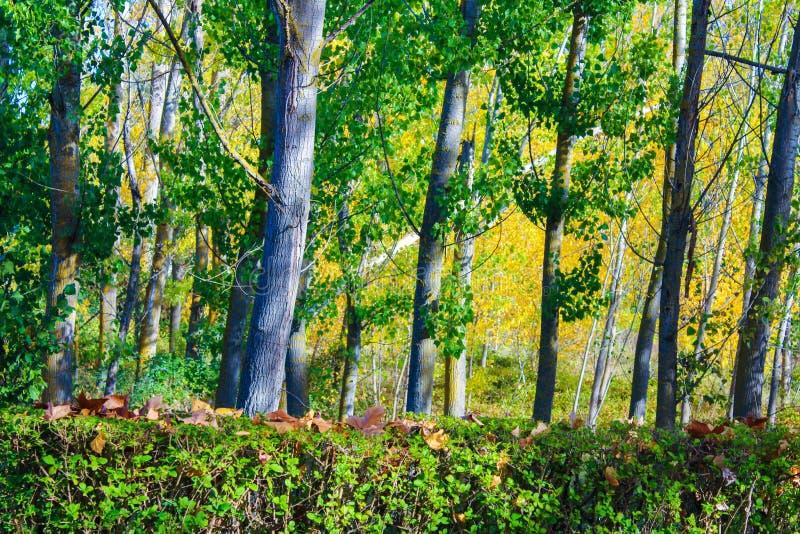 Fondo Forrest Nature Colourful de los árboles fotografía de archivo libre de regalías