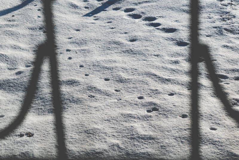Fondo frío y blanco como la nieve Día de Frosty Sunny y fresco La visi?n desde la ventana La textura de la nieve quebradiza en la fotografía de archivo