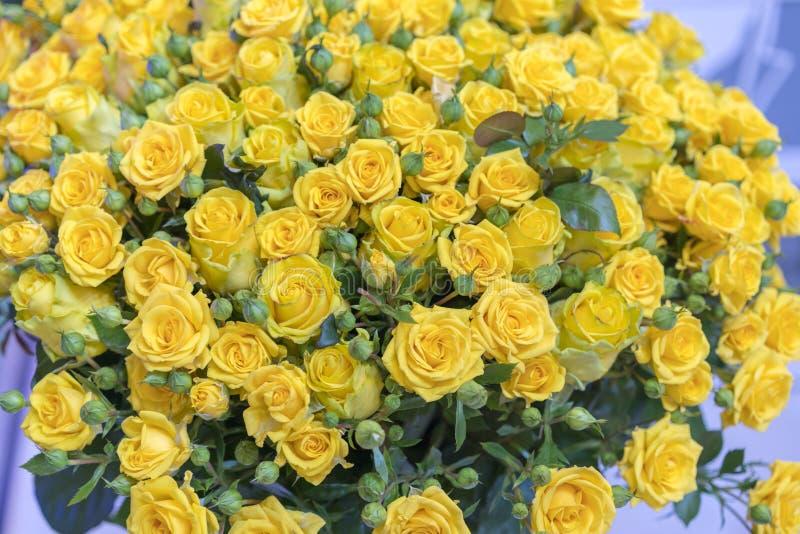 Fondo fresco del fiore del mazzo delle rose gialle Superficie di belle rose gialle nelle gocce di rugiada Fondo delle rose Salvas fotografia stock
