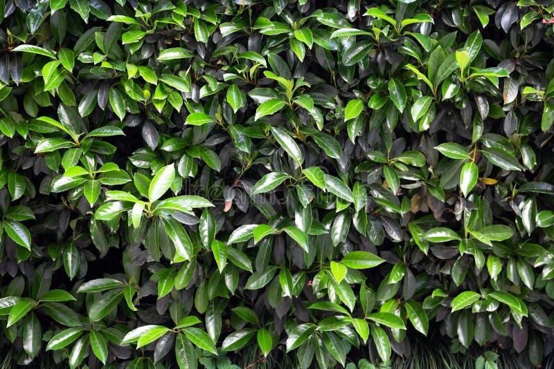 Fondo fresco del modello delle foglie verdi Priorit? bassa della natura l'illustrazione colorata della mano ha fatto l'estate del fotografia stock