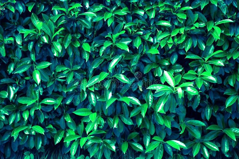 Fondo fresco del modello delle foglie verdi Fondo tonificato della natura l'illustrazione colorata della mano ha fatto l'estate d fotografie stock libere da diritti