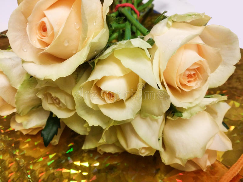 Fondo fresco del oro del tronco verde de las flores de las rosas foto de archivo libre de regalías