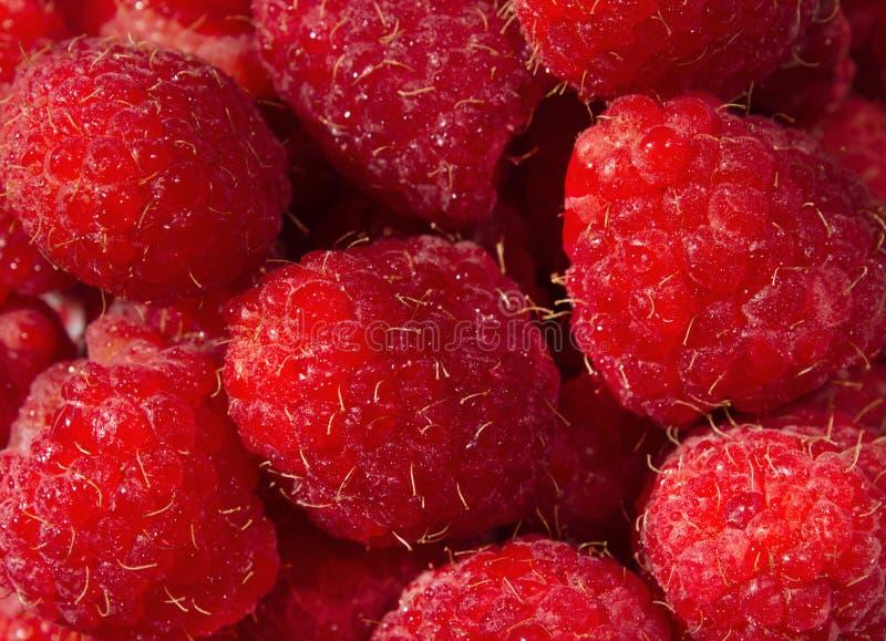 Fondo fresco y dulce de la textura de las frambuesas rojas fotografía de archivo libre de regalías