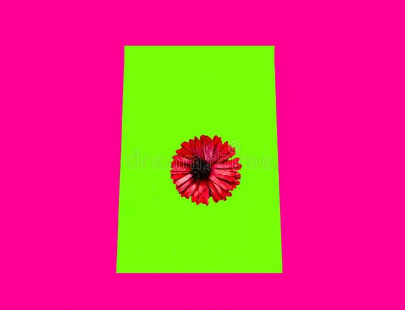 Fondo geométrico del color con la flor del gerbera Colores púrpuras y verdes de moda del UFO imágenes de archivo libres de regalías