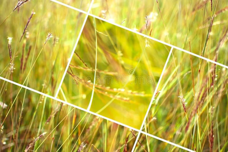 Fondo geometrico dell'estratto dell'erba con i triangoli e le linee immagini stock